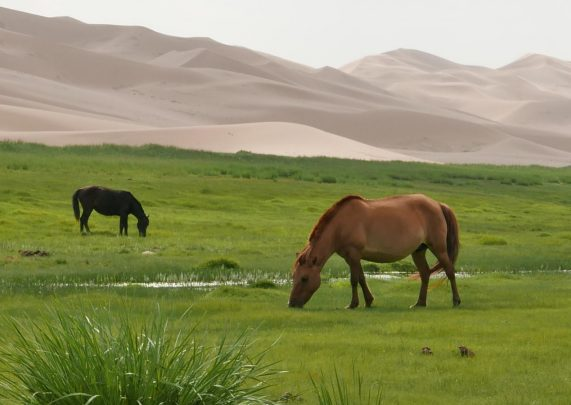 (Polski) Mongolia
